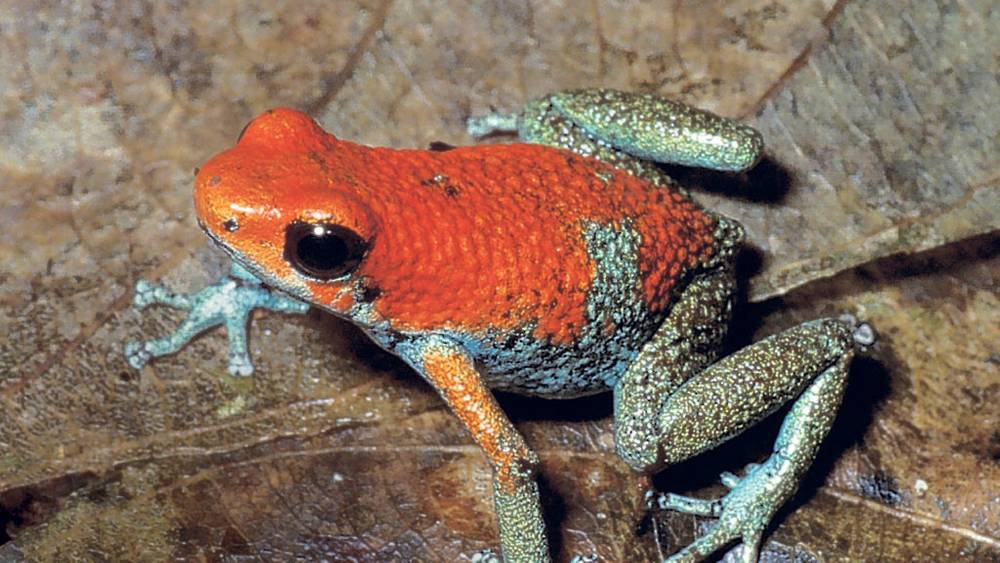 Amphibians face raised extinction threat