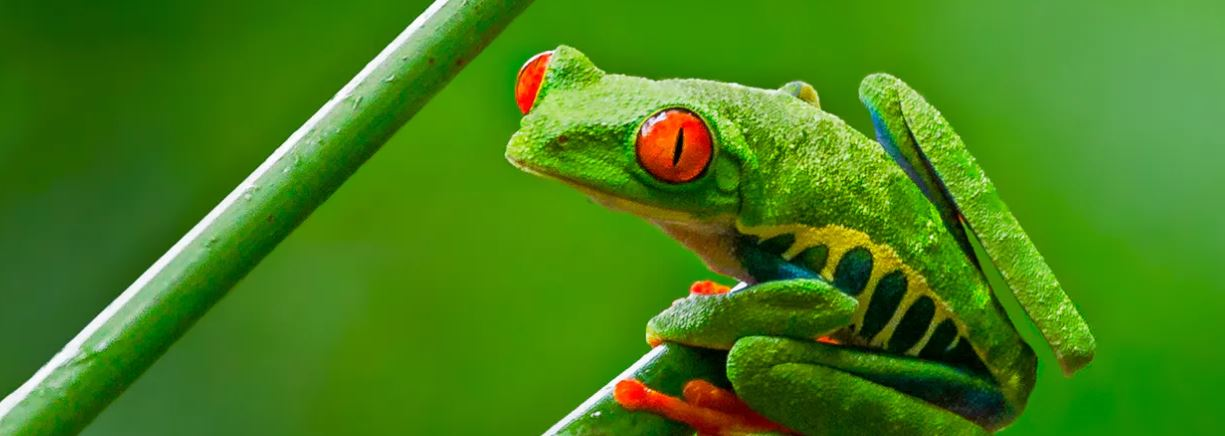 Global pet trade in amphibians is bigger than we thought